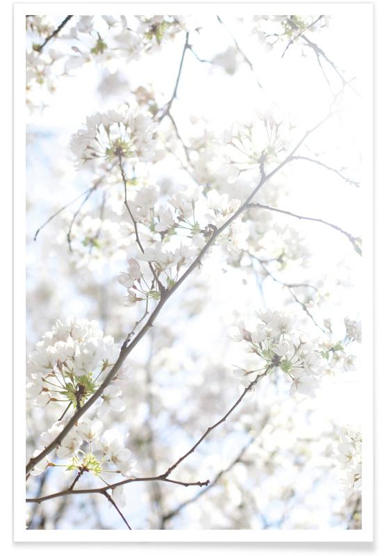 Leaves & Plants, Cherry Blossoms 2 Poster