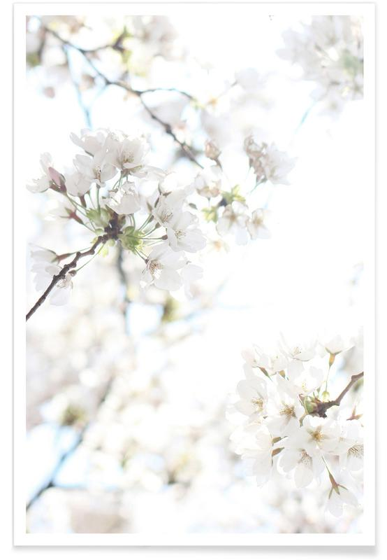 Cherry Blossoms 1 Poster