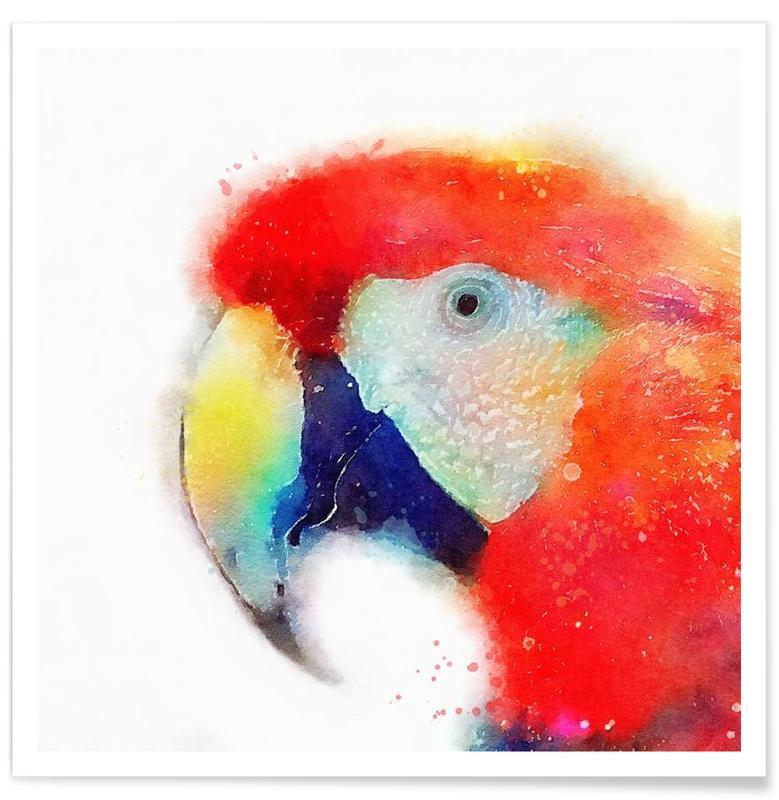 Perroquets, The Articulate affiche