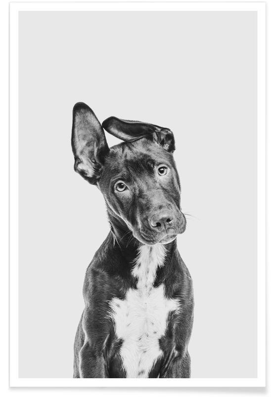 Dogs, Nursery & Art for Kids, Dog II Poster