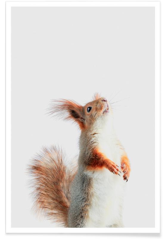 Ecureuils, Art pour enfants, Red Squirrel II affiche