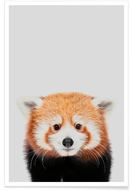 Ours, Art pour enfants, Red Panda II affiche