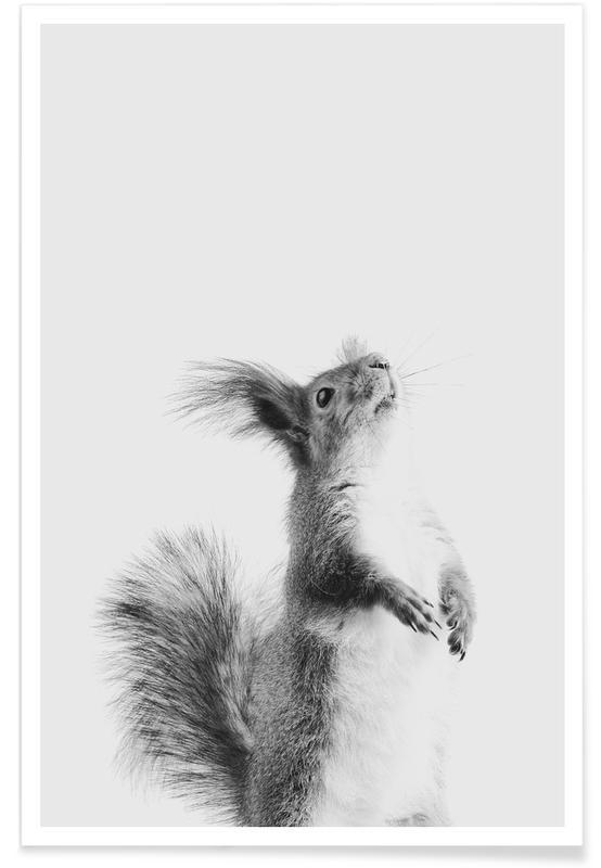 Egern, Børneværelse & kunst for børn, Red Squirrel III Plakat