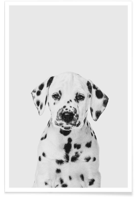 Chiens, Art pour enfants, Dalmatian Puppy II affiche