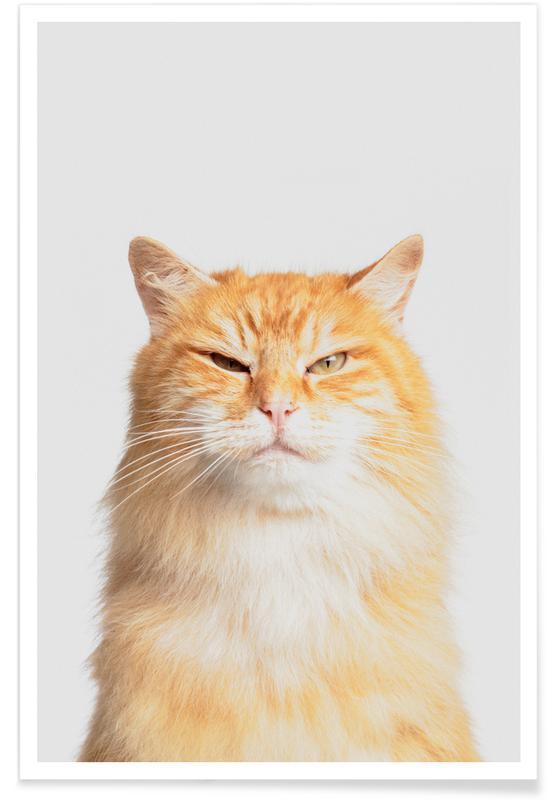 Cats, Nursery & Art for Kids, Scowl Poster