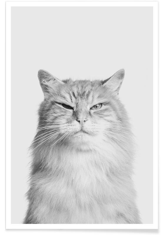 Cats, Nursery & Art for Kids, Scowl II Poster