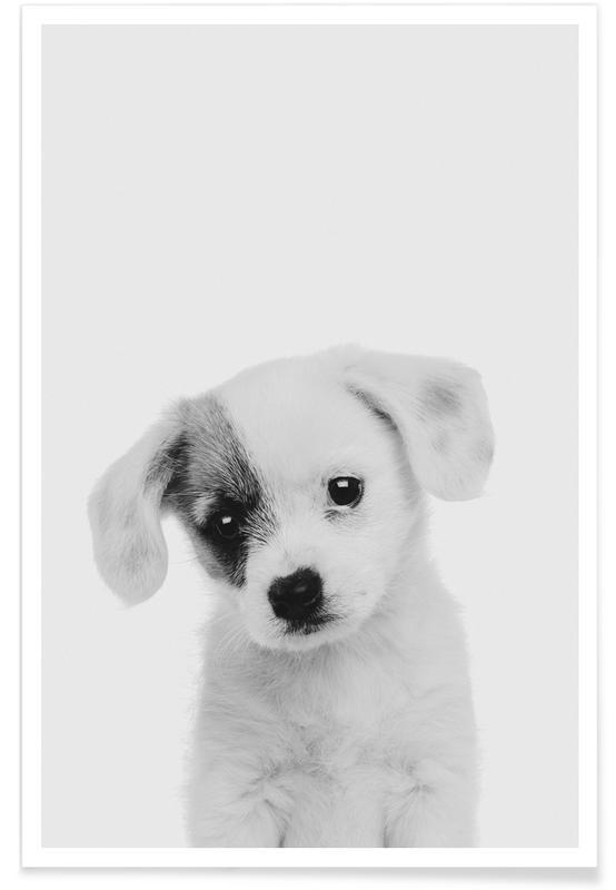 Børneværelse & kunst for børn, Sort & hvidt, Hunde, Puppy II Classic Plakat