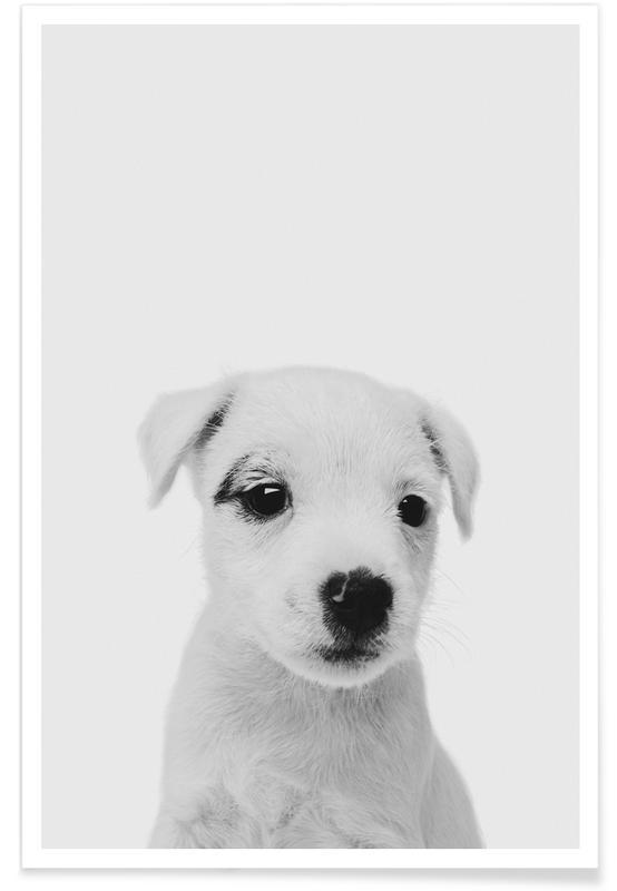 Art pour enfants, Chiens, Noir & blanc, Puppy III Classic affiche