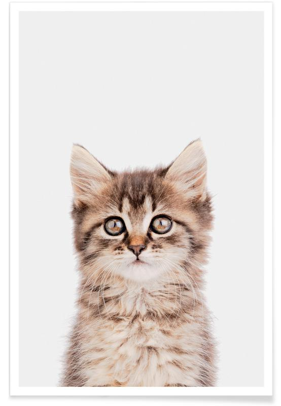 Katte, Børneværelse & kunst for børn, Kitten II Plakat