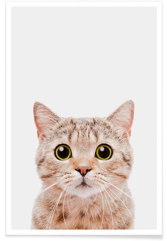 Chats, Art pour enfants, Kitten affiche