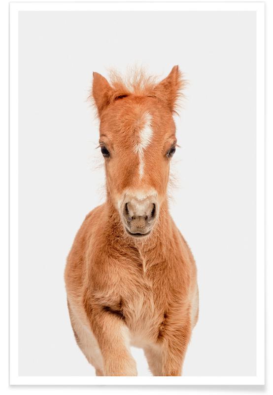Chevaux, Art pour enfants, Foal affiche