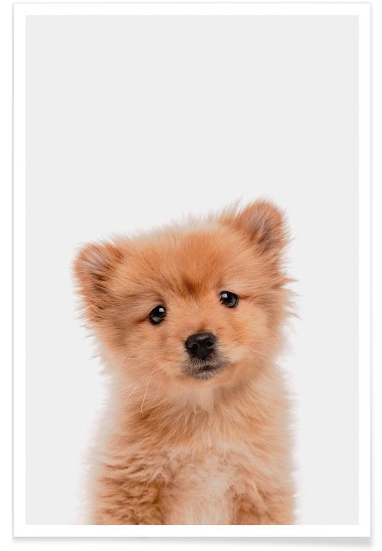 Chiens, Art pour enfants, Puppy II affiche