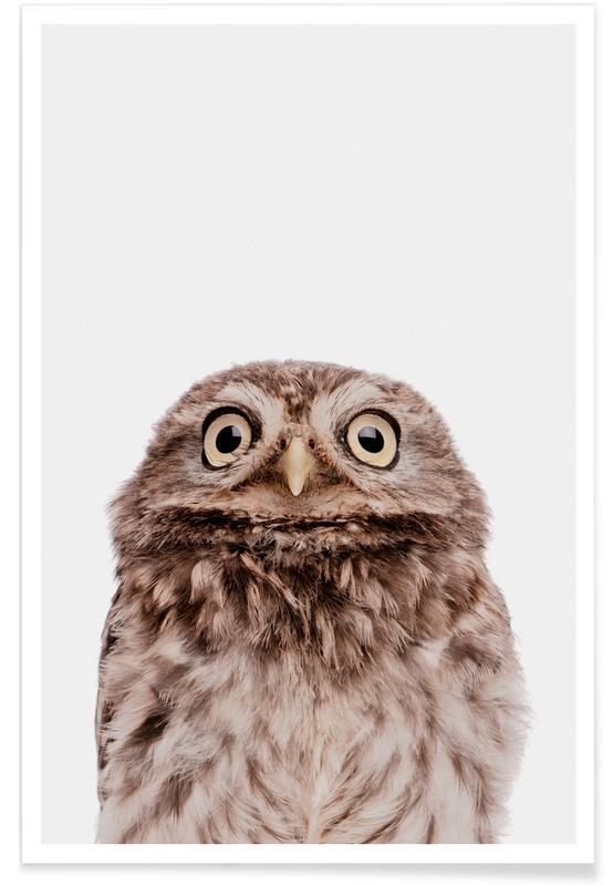 Art pour enfants, Noël, Chouettes, Owl affiche