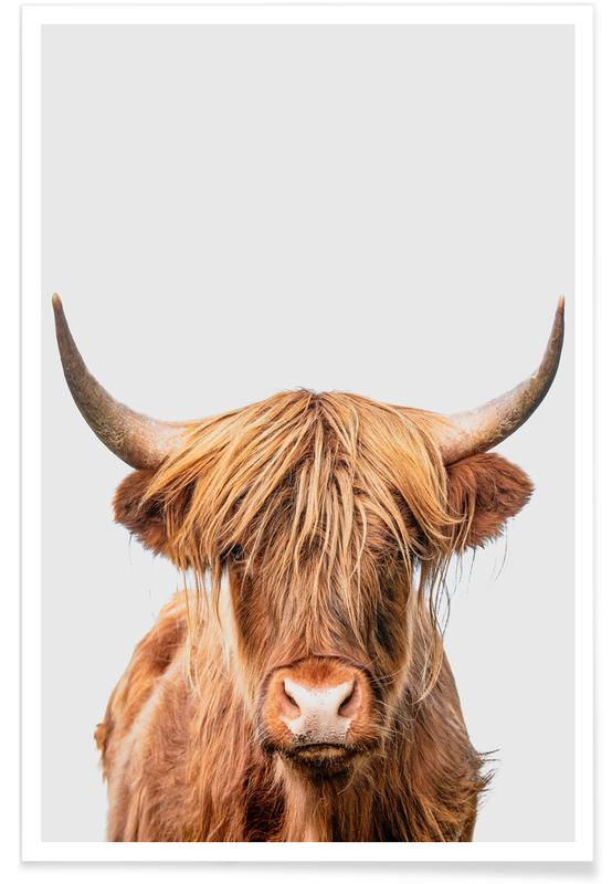 Kunst voor kinderen, Koeien, Schotse Hooglanders, Highland Cow poster