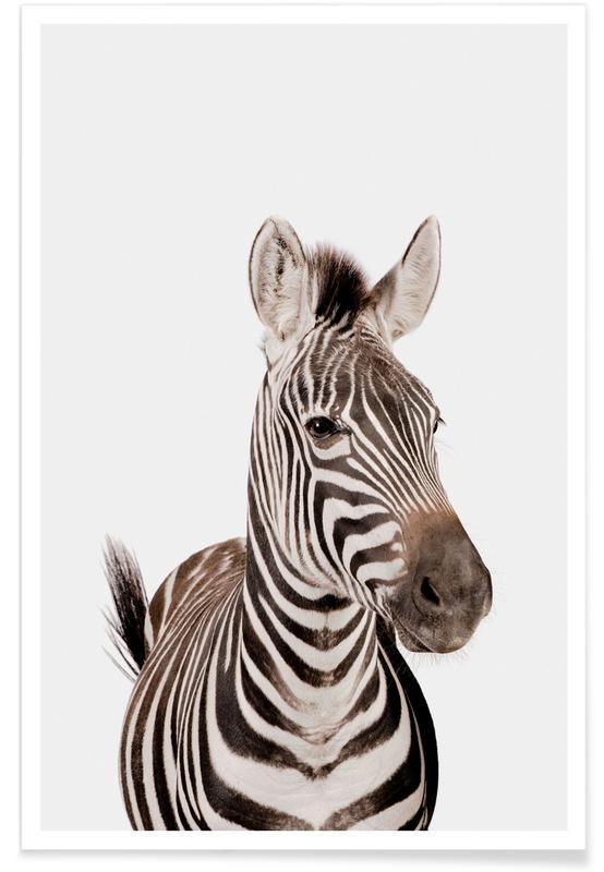 Børneværelse & kunst for børn, Safari dyr, Zebra Plakat