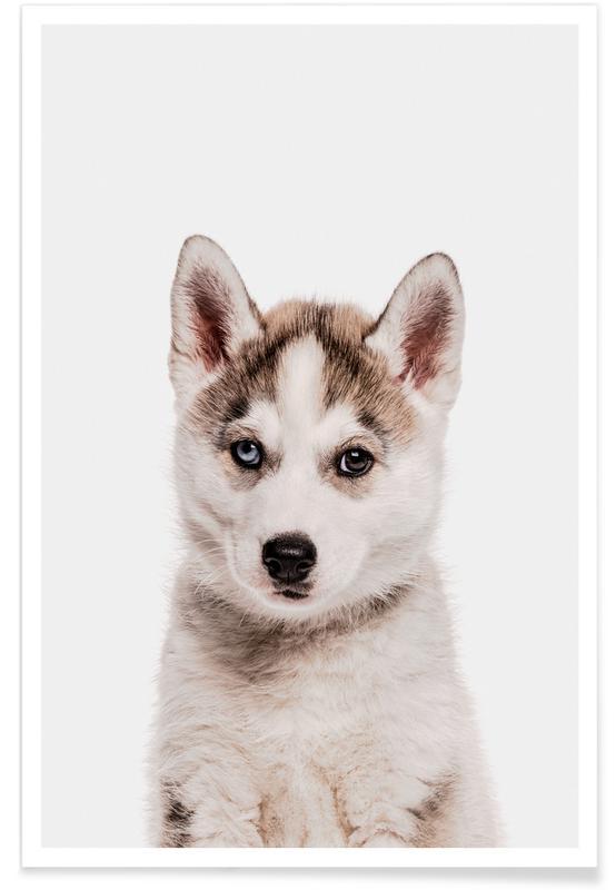 Honden, Kunst voor kinderen, Husky poster