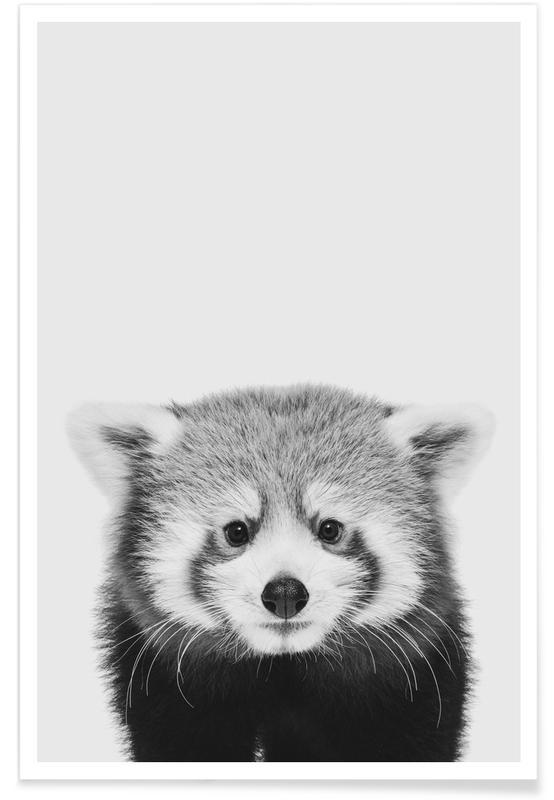 Ours, Art pour enfants, Red Panda affiche