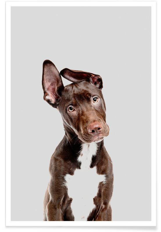 Chiens, Art pour enfants, Dog affiche