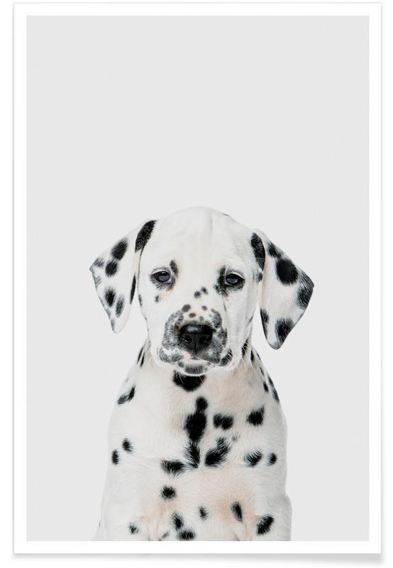 Chiens, Art pour enfants, Dalmatian Puppy affiche