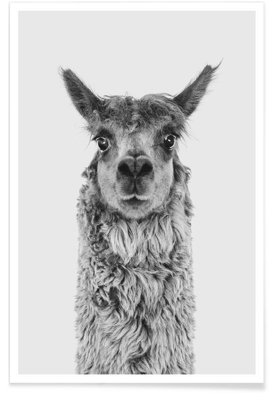 Nursery & Art for Kids, Alpaca Poster