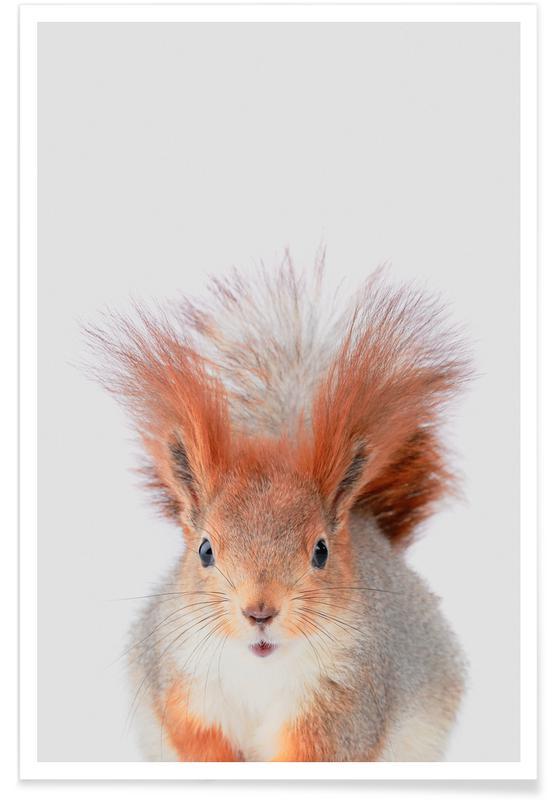 Ecureuils, Art pour enfants, Red Squirrel affiche