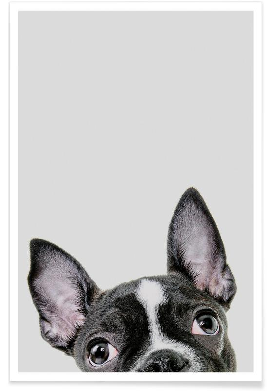 Chiens, Art pour enfants, French Bulldog affiche