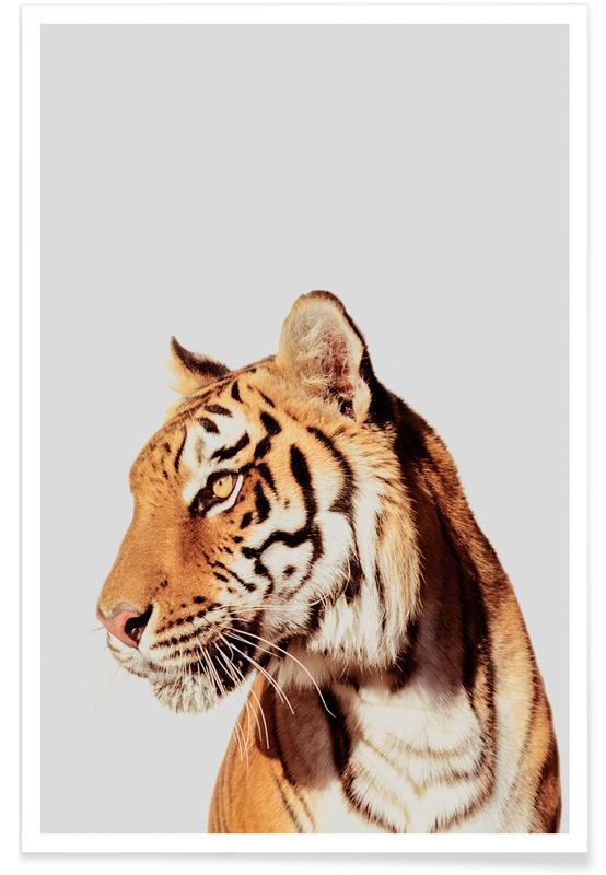 Art pour enfants, Tigres, Tiger affiche