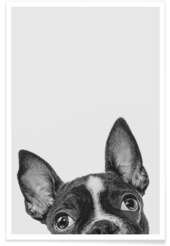 Honden, Kunst voor kinderen, French Bulldog II poster