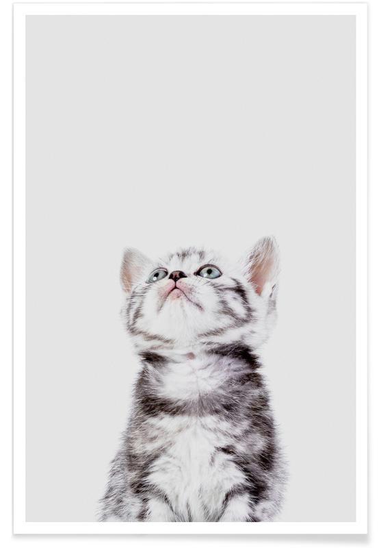 Cats, Nursery & Art for Kids, Kitten Poster