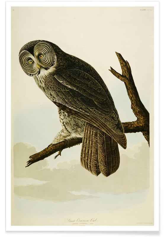 John James Audubon, Audubon - Great Cinereous Owl, 'The Birds Of America' poster
