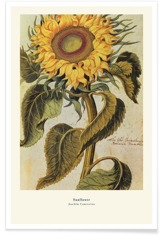Joachim Camerarius, Joachim Camerarius - Sunflower -Poster