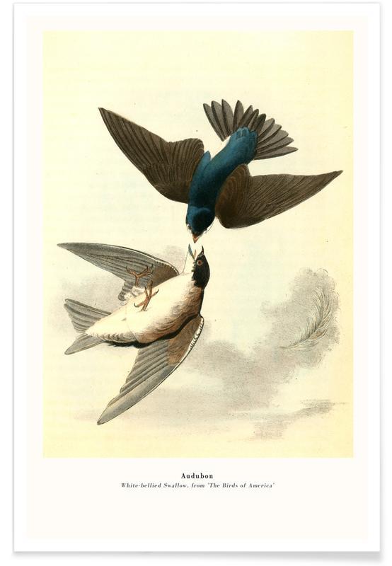 John James Audubon, Audubon - White-bellied Swallow, from 'The Birds of America' Poster