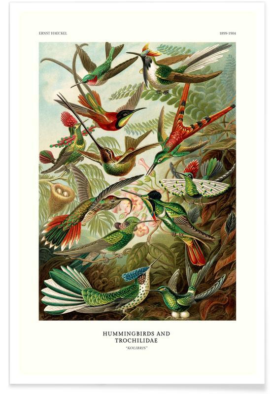 Ernst Haeckel, Haeckel - Hummingbirds and Trochilidae (Kolibris) Poster