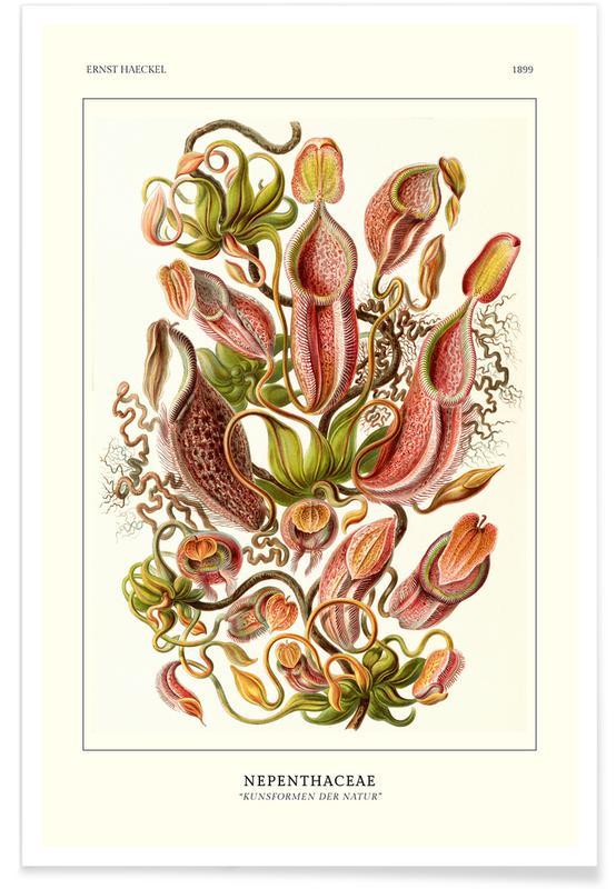Ernst Haeckel, Haeckel - Nepenthaceae affiche