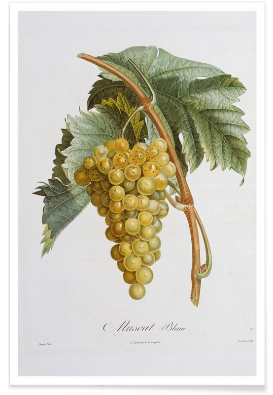 Pierre Jean François Turpin, Turpin - White Grape Muscat Blanc poster