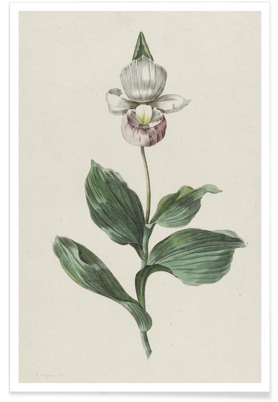 Hendrik Schwegman, Hendrik Schwegman - Cypripedium Calceolus Poster