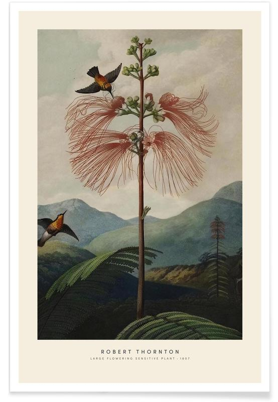 Vintage voyage, Thornton - Large Flowering Sensitive Plant affiche