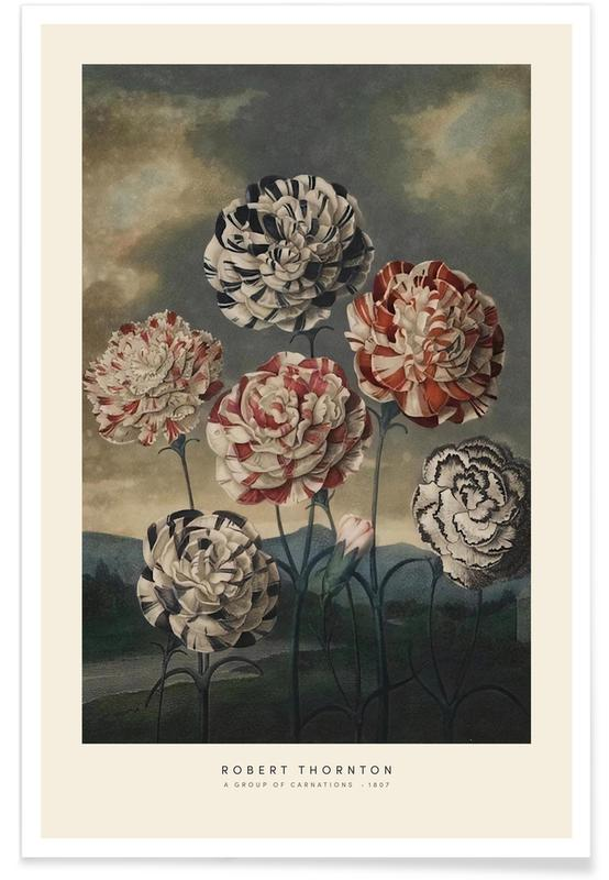 Vintage voyage, Thornton - A Group of Carnations affiche