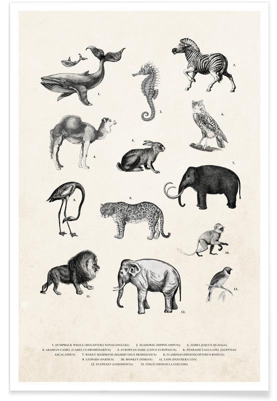 , Vintage Animal Chart affiche