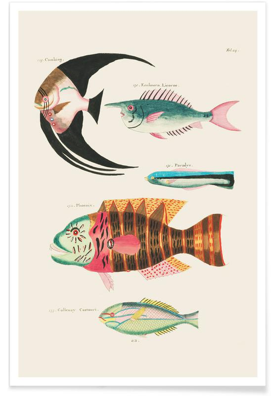 , Renard - Colourful and Surreal Illustrations of Fish affiche