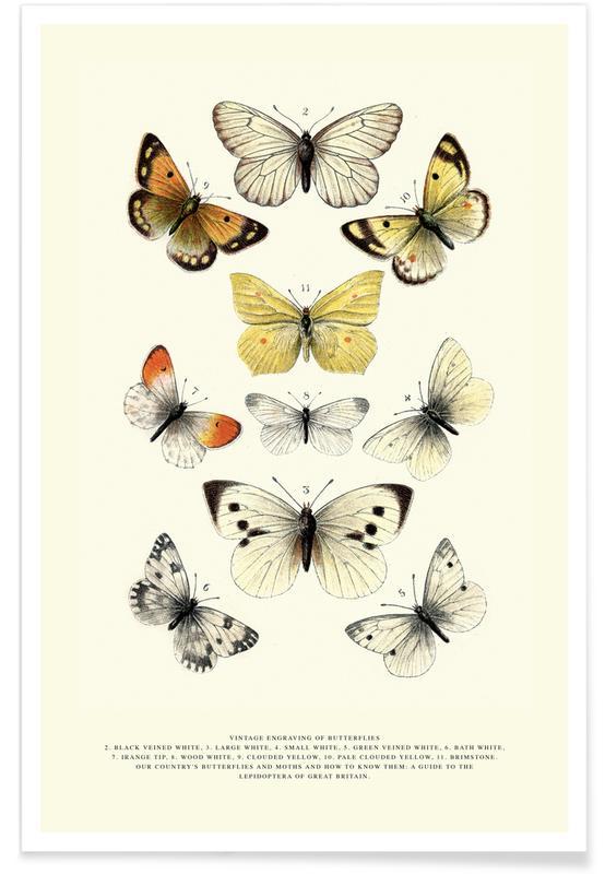 Vlinders, Japans geïnspireerd, Vintage Butterflies poster