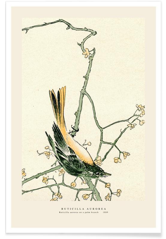 D'inspiration japonaise, Ruticilla Aurorea affiche