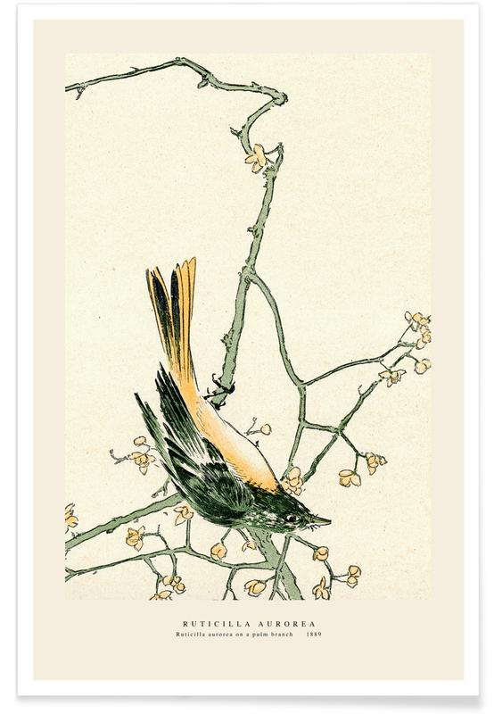 Japanese Inspired, Ruticilla Aurorea Poster