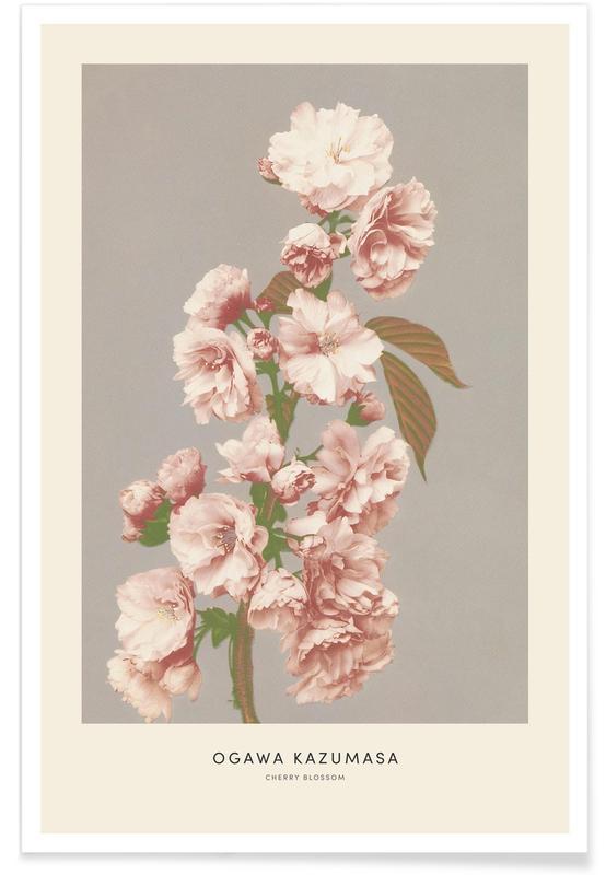 Japanese Inspired, Kazumasa - Cherry Blossom Poster