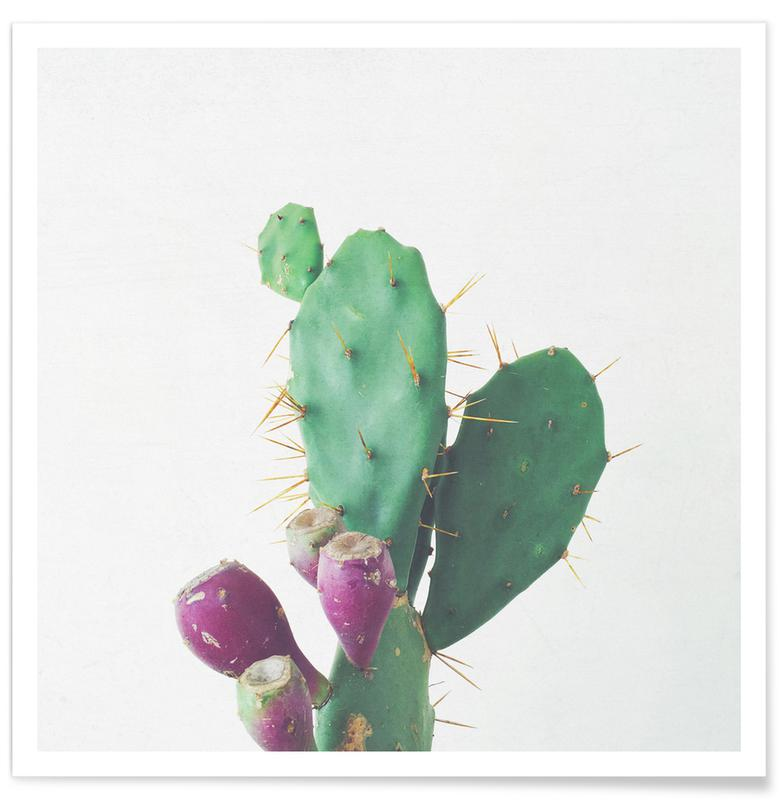 Cactus, Prickly Pear affiche