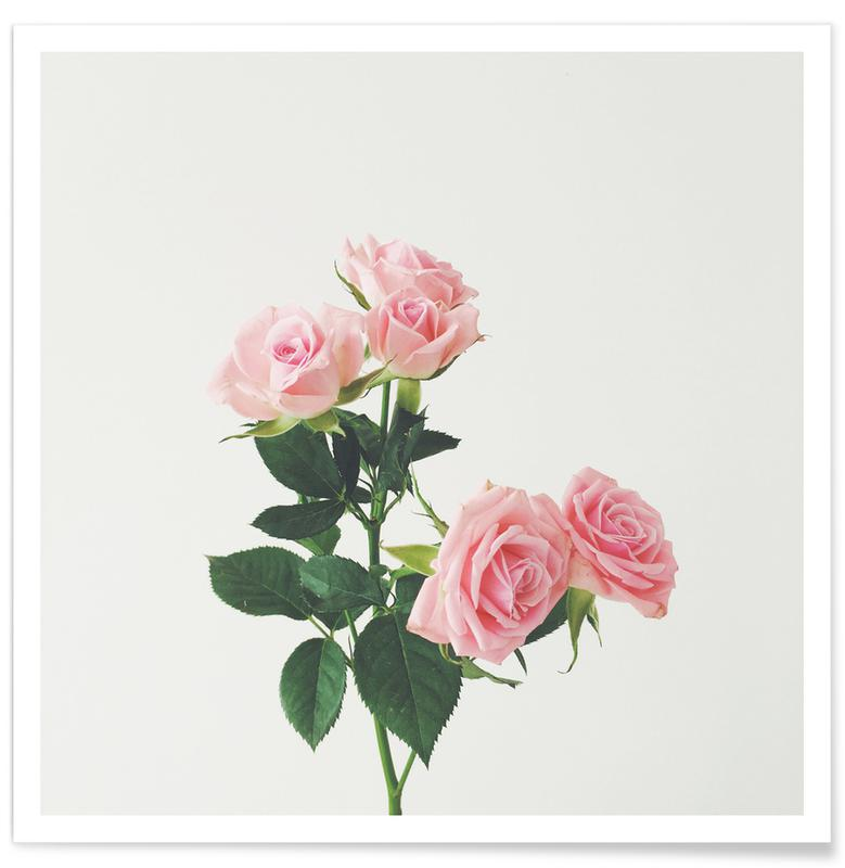 Roses, Spring Roses Poster