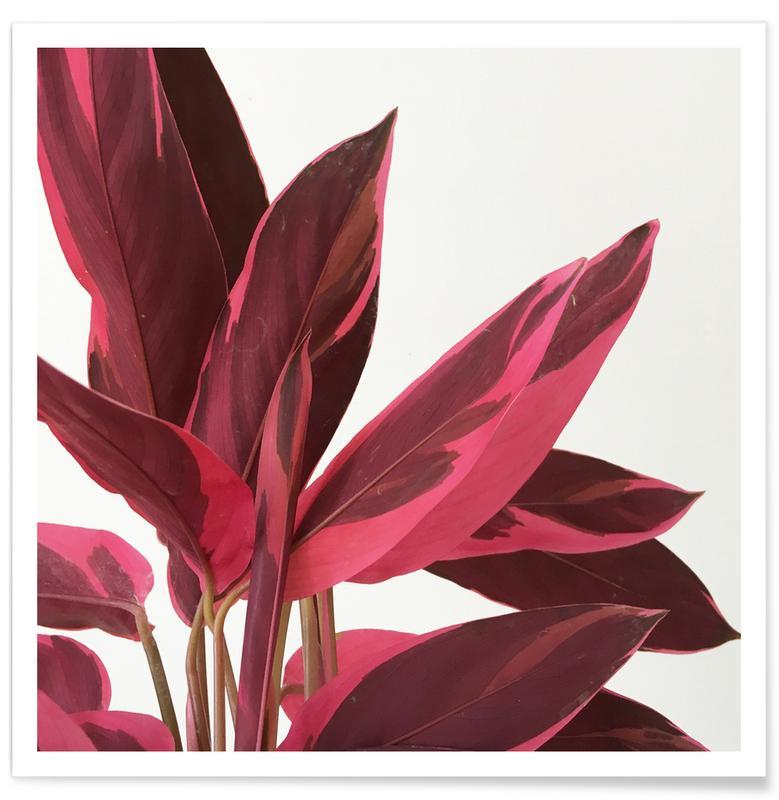 Bladeren en planten, Red Leaves II poster