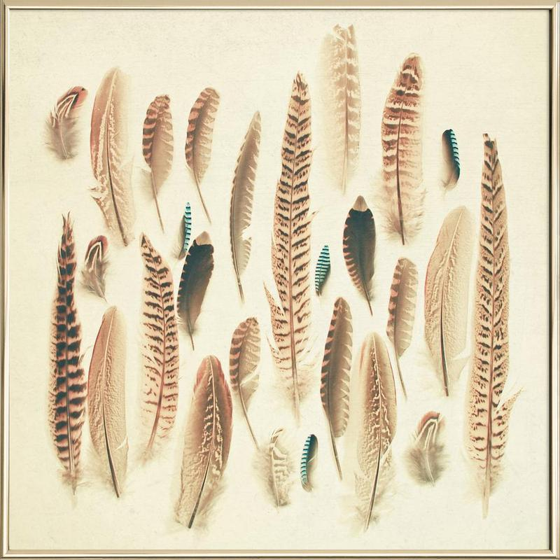 Found feathers -Poster im Alurahmen
