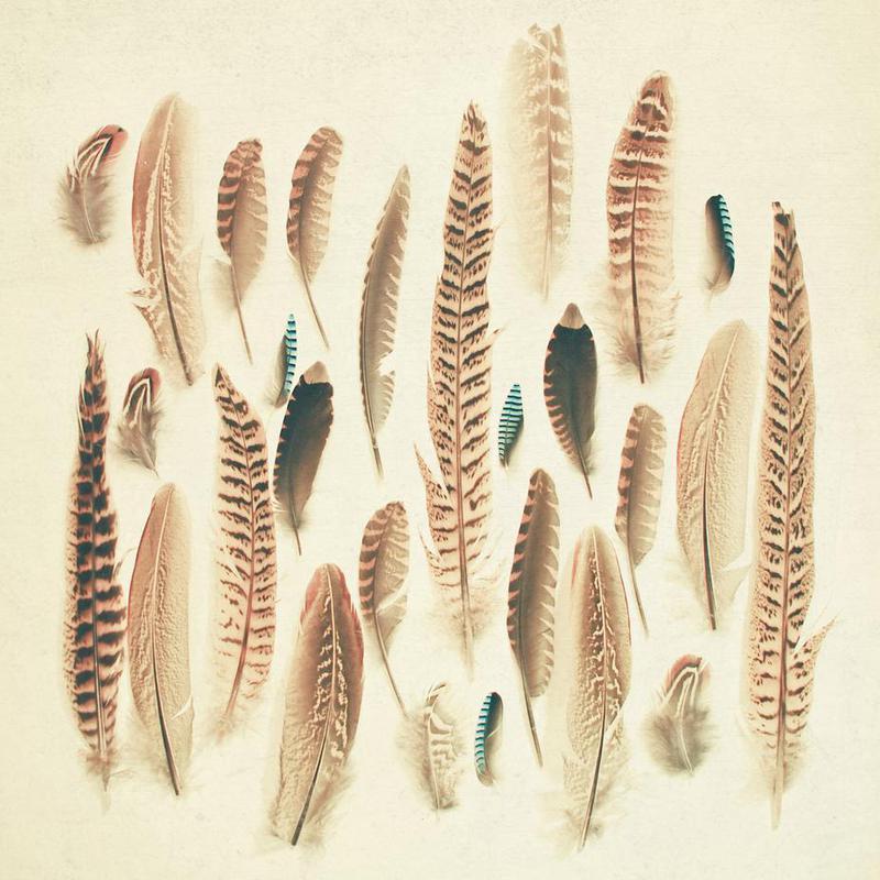 Found feathers -Acrylglasbild