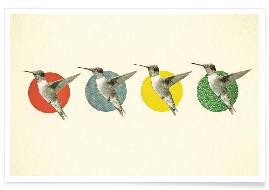 Colibris, The hummingbird dance affiche
